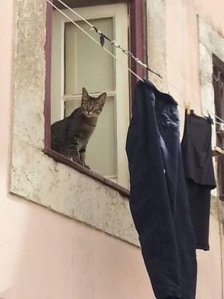 Katt i vinduet i Lisboa (foto: treasuresbyeveline)